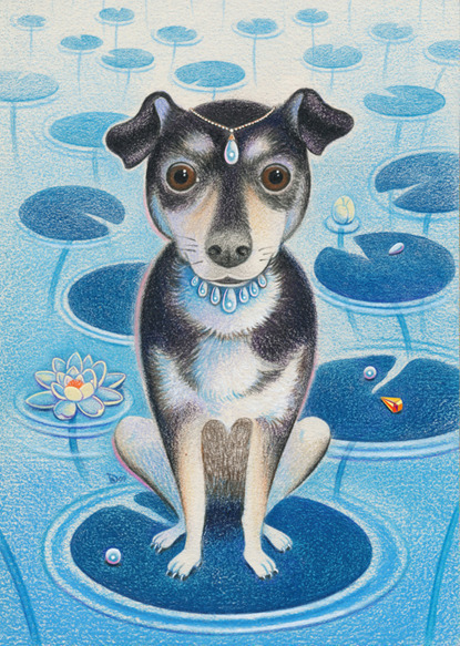 Dave Calver - Pet Portraits